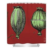 Opium Harvesting Shower Curtain by Science Source