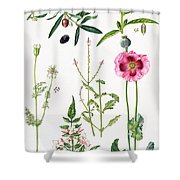 Opium Poppy And Other Plants  Shower Curtain by  Elizabeth Rice