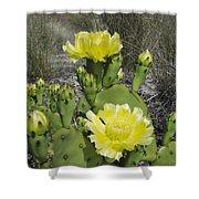 Opuntia Opuntia Sp Cactus Flowering Shower Curtain