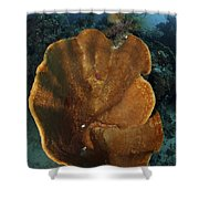Orange And Brown Sponge, North Shower Curtain