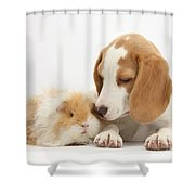 Orange-and-white Beagle Pup And Alpaca Shower Curtain