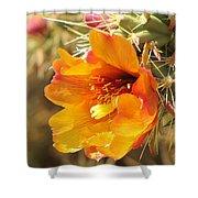 Orange And Yellow Cactus Flower Shower Curtain