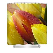 Orange And Yellow Tulips Shower Curtain