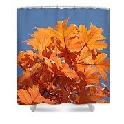 Orange Autumn Leaves Art Prints Blue Sky Shower Curtain