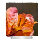 orange Bougainvillea Shower Curtain