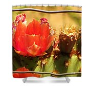 Orange Cactus Flower With Fence Shower Curtain