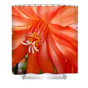 Orange Cactus Shower Curtain