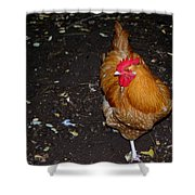 Orange Chicken Shower Curtain
