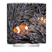 Orange Clownfish In An Anemone Shower Curtain