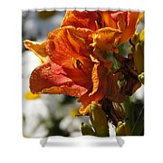 Orange Day Lilies In The Sun Shower Curtain