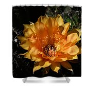 Orange Echinopsis Flower  Shower Curtain