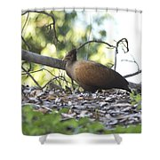 Orange Footed Scrub Fowl Shower Curtain