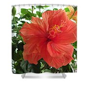 Orange Hibiscus Shower Curtain