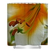 Orange Interior Shower Curtain