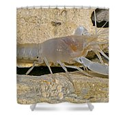 Orange Lake Cave Crayfish Shower Curtain