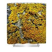 Orange Lichen - Xanthoria Parietina Shower Curtain