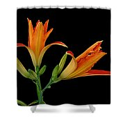Orange Lily On Black Shower Curtain