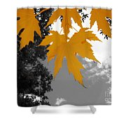 Orange Maple Leaves Shower Curtain