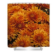 Orange Mums Shower Curtain