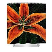 Orange Oriental Lily Shower Curtain