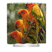 Orange Parakeets Chiang Mai Thailand Shower Curtain
