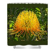 Orange Protea Flower Art Shower Curtain by Rebecca Margraf