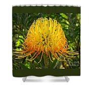 Orange Protea Flower Art Shower Curtain
