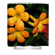 Orange Rhododendron Flowers Shower Curtain