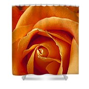 Orange Rose Close Up Shower Curtain by Garry Gay
