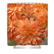 Orange Sherbert Shower Curtain
