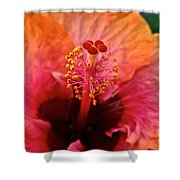 Orange Sherbert Hibiscus Shower Curtain