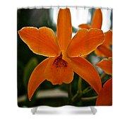 Orange Sherbert  Orchid Shower Curtain