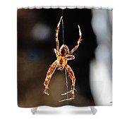 Orange Spider Shower Curtain