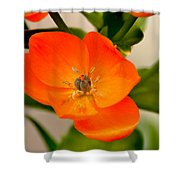 Orange Star   Shower Curtain