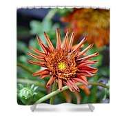 Orange Starburst Shower Curtain