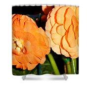 Orange Tuberous Begonias Shower Curtain
