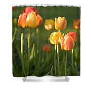 Orange Tulips Shower Curtain