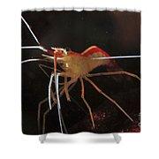 Orange White And Red Shrimp, Bali Shower Curtain