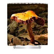 Orange Wild Mushroom Shower Curtain