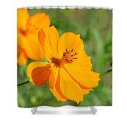 Orange Wildflower Shower Curtain