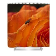 Orange With Visitor Shower Curtain
