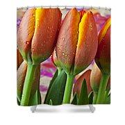 Orange Yellow Tulips Shower Curtain