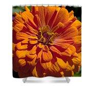 Orange Zinnia Shower Curtain