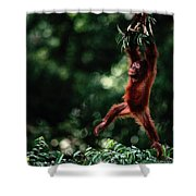 Orangutan Pongo Pygmaeus Shower Curtain