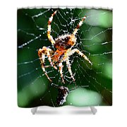 Orb Weaver And Lunch Shower Curtain
