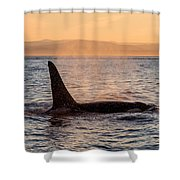 Orca At Sunset Shower Curtain