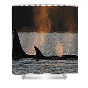 Orca Orcinus Orca Resident Pod Shower Curtain