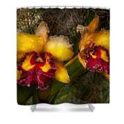 Orchid - Cattleya - Dripping With Passion  Shower Curtain