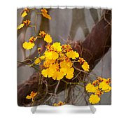 Orchid - Golden Morning  Shower Curtain