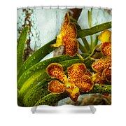 Orchid - Oncidium - Ripened   Shower Curtain